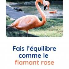 motricite-animaux-flamant-rose-babilou
